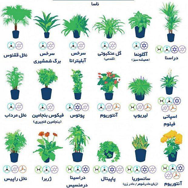 گیاهان ناسا